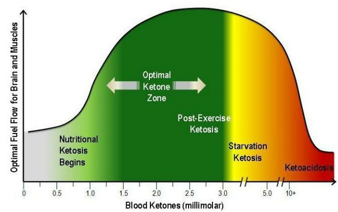 On Ketosis - The Special Metabolic State