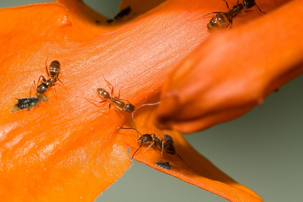 ANT Extermination - How to Get Rid of Negative Thoughts
