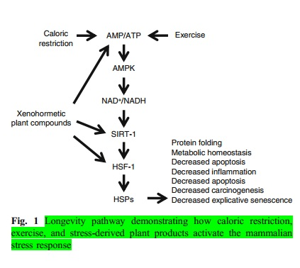 Higher ROS, Mitohormesis and Stressed Plants can Increase Healthy Lifespan 2