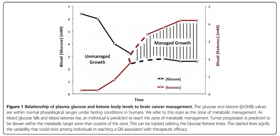 The Glucose-Ketone Index Approach to Cancer Therapy - Some Early Insights
