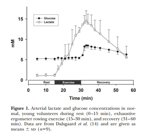 Lactate as Brain Fuel - Experiments and Implications - 2