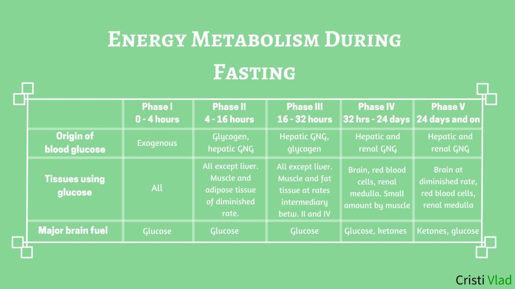 Energy Metabolism in the Fasted State - [Cahill's Research]