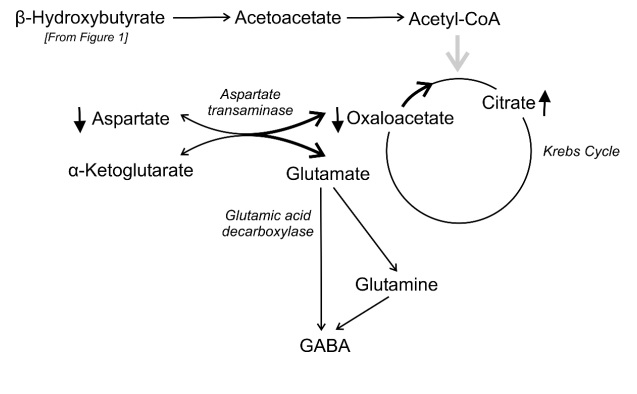 The Ketotic Brain - Differences Compared to the Glycolitic State - 3
